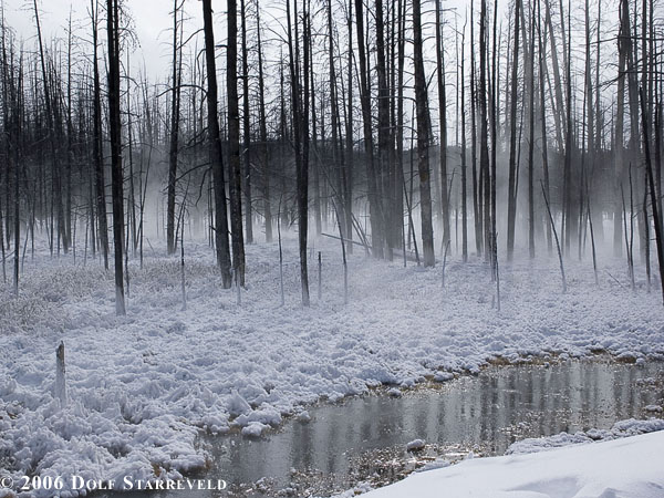 Trees in the mist: Yellowstone National Park, near Midway Basin